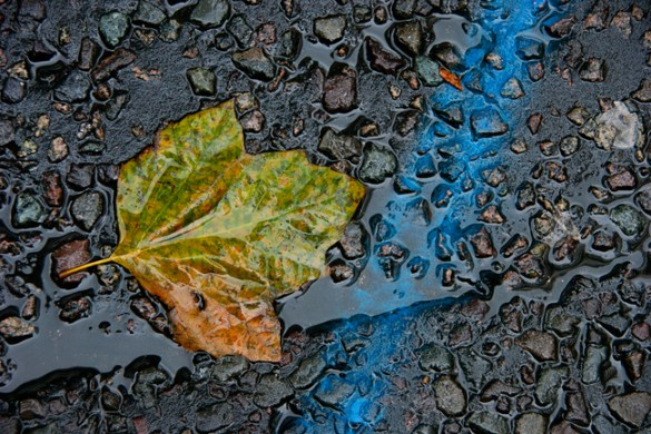 Blue line and leaf 2