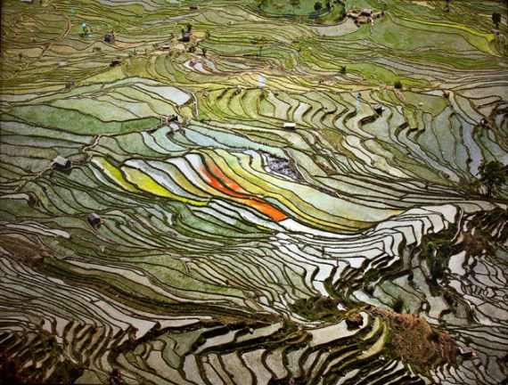 Rice fields by Edward Burtynsky