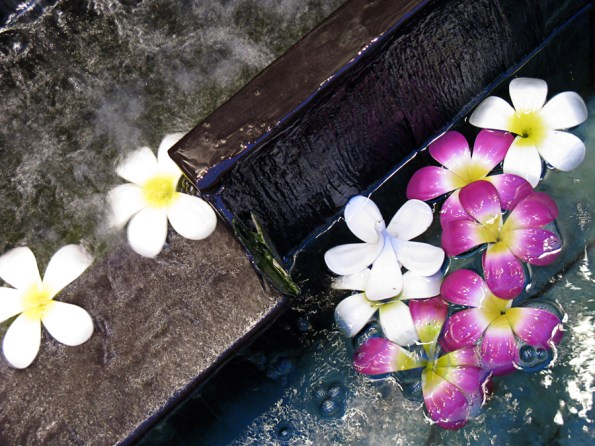 Flowers in a fountain