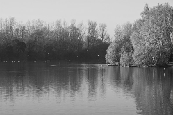 Autumn lake, Balderton Lakes, Newark, black and white version