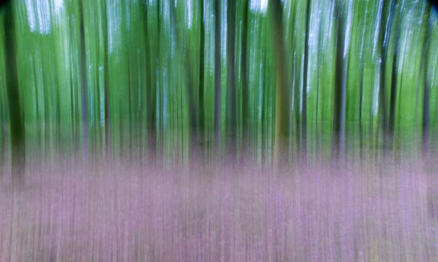 New Forest, intentional camera movement