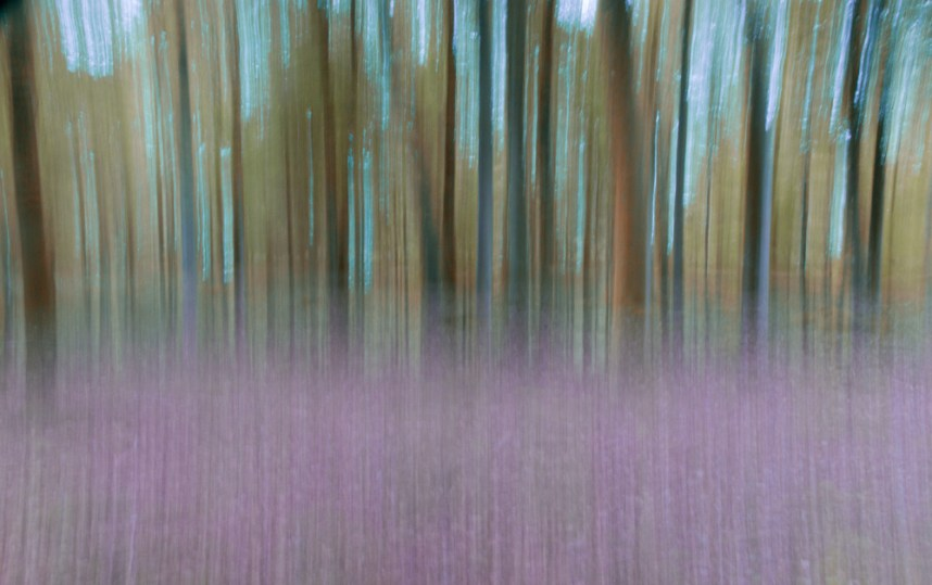 ICM, New Forest, Indian Summer Color Efex filter