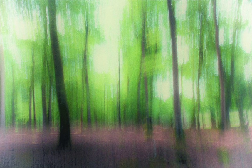 Impression, early summer, New Forest
