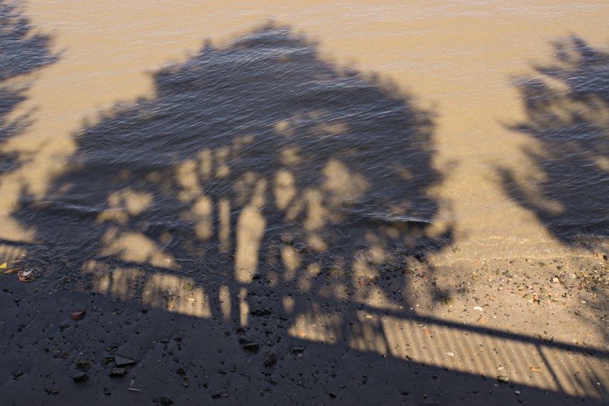 Tree shadow on the Thames, South Bank