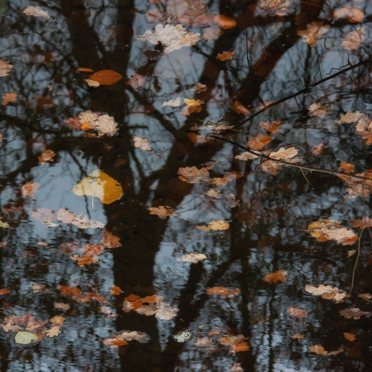 Winter leaves with reflection