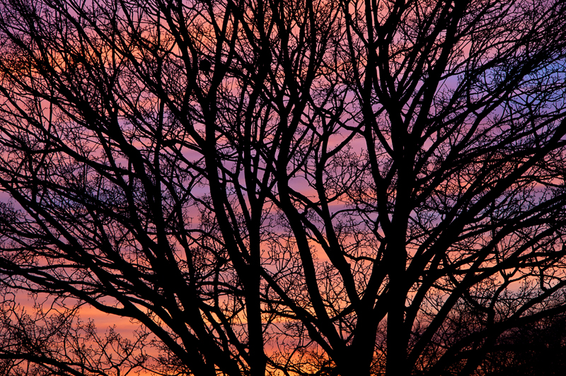 Sunset, with tree branches