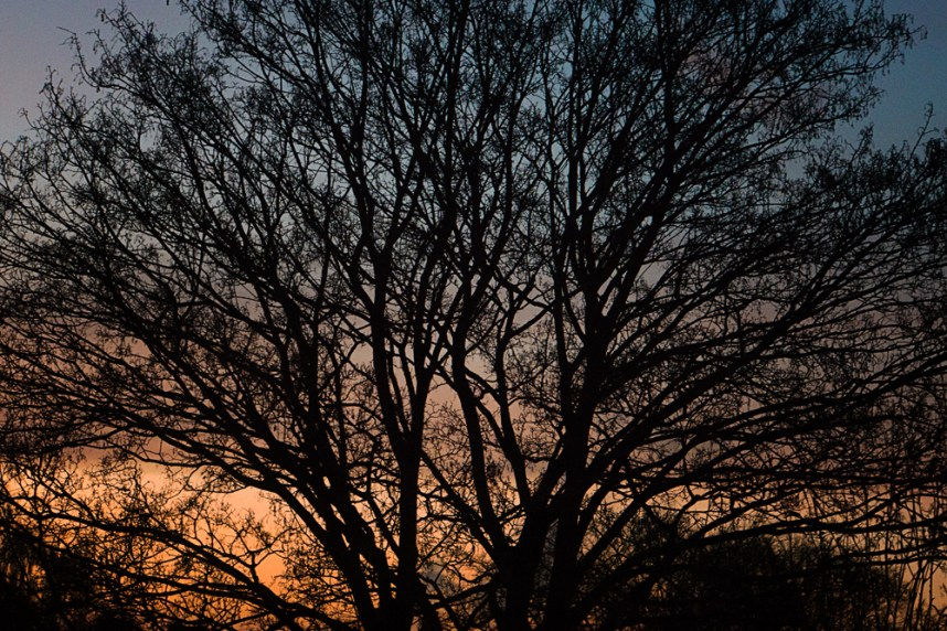 tree sunset branches silhouette fractal abstract