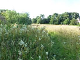 Looking north from the bottom of the meadow