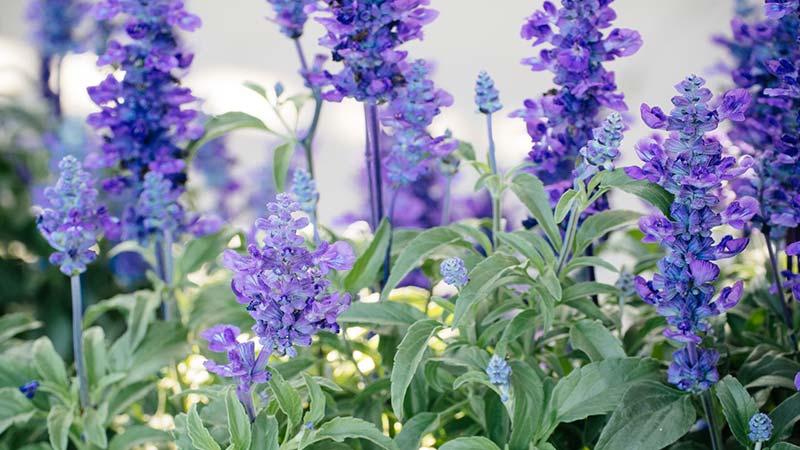 Easy Maintenance Indoor Plants