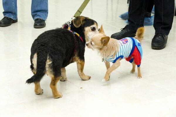 В ожидании приёма врача в ветеринарной клинике.