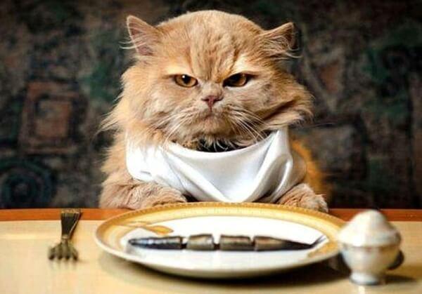 Статья об общих принципах кормления кошек, типах рационов питания кошек и особенностях чистого кормления и сочетания рационов.