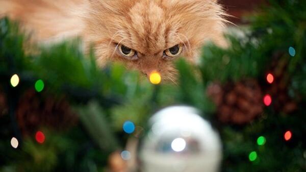 Кот охотится на новогодний шар
