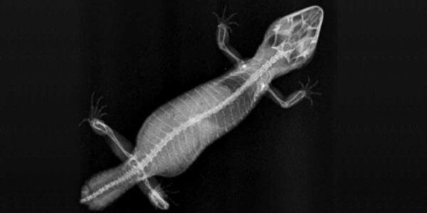 Рентген для животных в Санкт-Петербурге