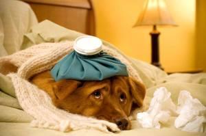 О самолечении животных рассказывает ветеринарный врач Якин Дмитрий Владимирович. Когда можно справиться своими силами, а когда не обойтись без посещения ветклиники.