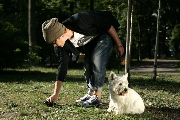 Сбор собачьего кала на анализы