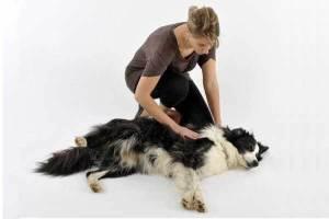 Ветврач-невролог Рогозина Е. И. рассказывает про судороги у животных и даёт советы, что нужно делать, если вы обнаружили у вашего питомца судороги.