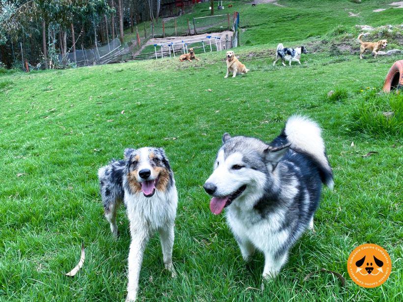 Logramos que tu mascota esté bien educada con ejercicios para mejorar el comportamiento de los perros; entrenamiento canino, ejercicio adecuado y cariño.