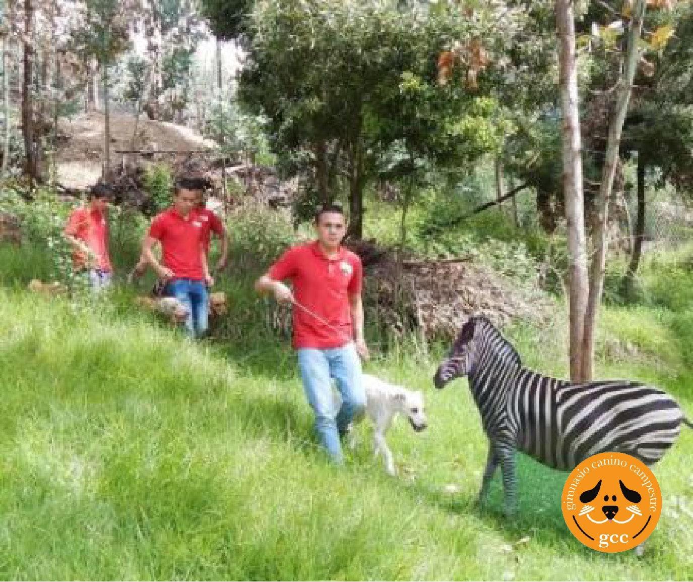 Caminatas Ecológicas con Mascotas en Bogotá - Guardería Canina Gimansio Canino Campestre
