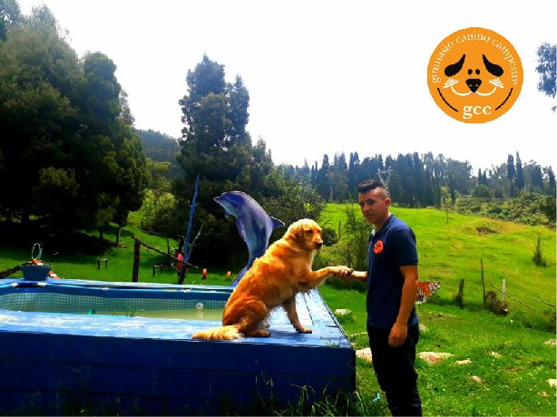 Piscina_para_perros_Gimnasio_Canino_Campestre