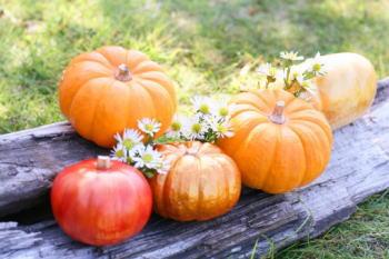 ハロウィンで使われるかぼちゃの種類