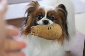 犬が家族に唸る理由?!家族を順位付けしているから?!唸る時の対処法?!