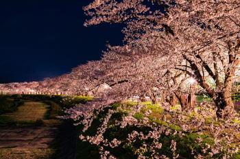 西浦温泉桜まつりのライトアップは何時で終わる?