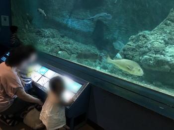 和歌山県立自然博物館に行って特に良かった点は?