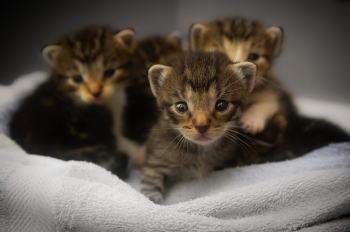 野良猫の子猫を病院で診てもらう!もし病気なら適切な治療を受ける!