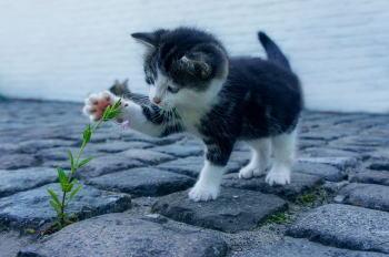 野良猫の子猫をなつかせる方法4選