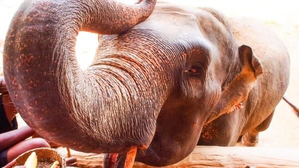 象の餌やり