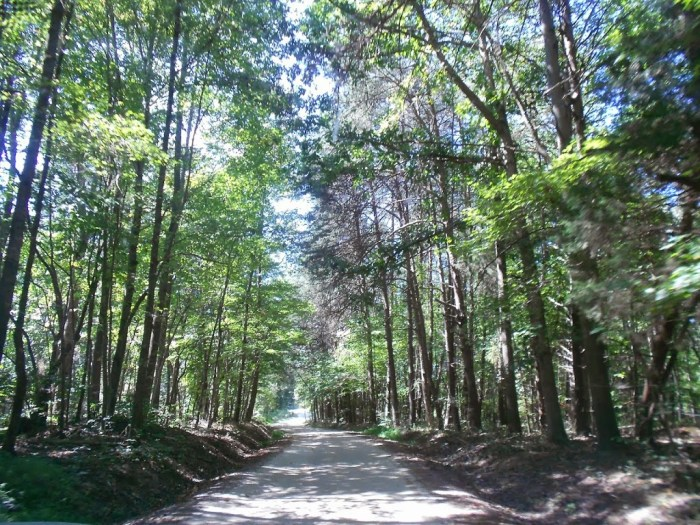 Road to the Conservator's Center in Mebane, NC