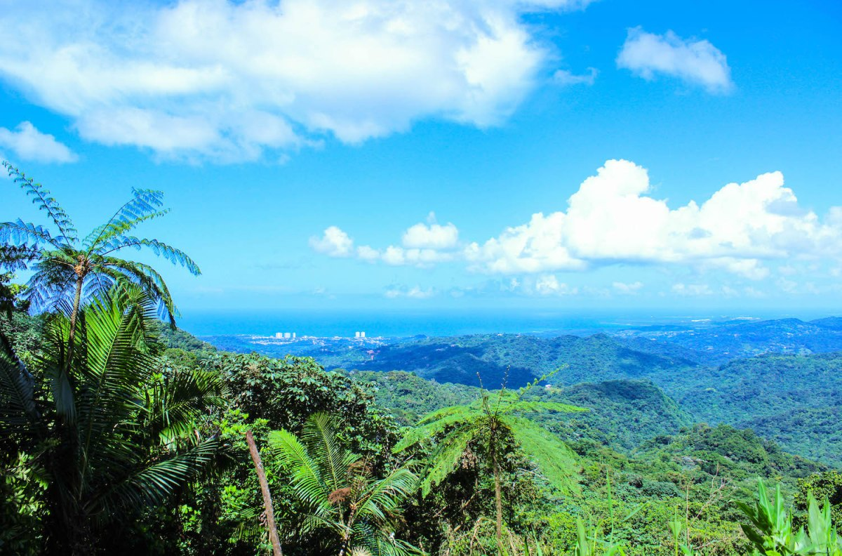 Best View in Puerto Rico - El Yunque Rainforest