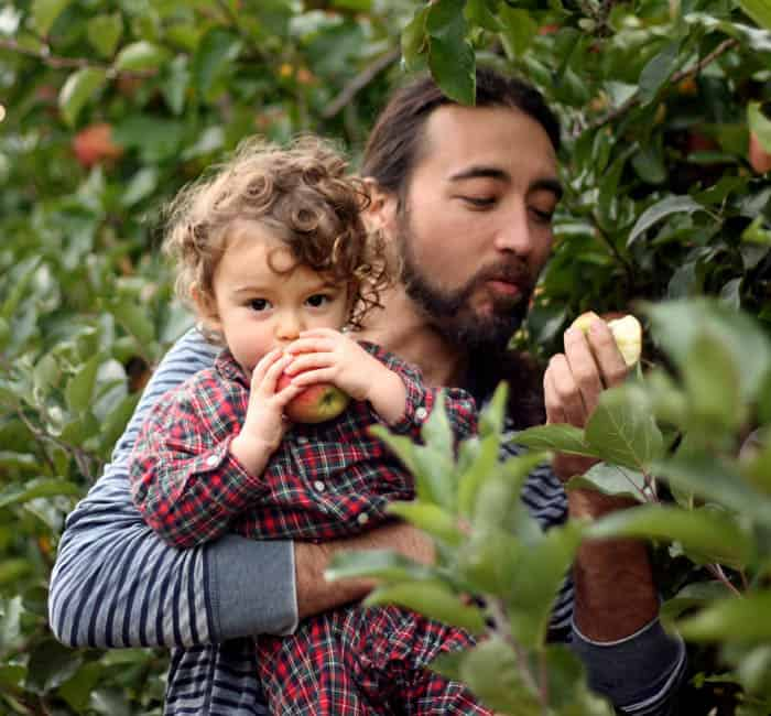 Apple Picking Dad and Baby