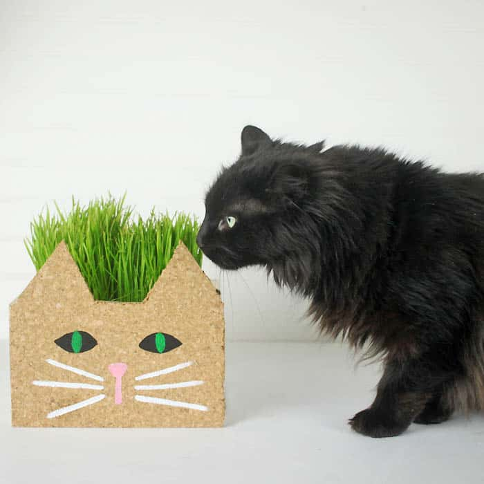 Cat Planter DIY