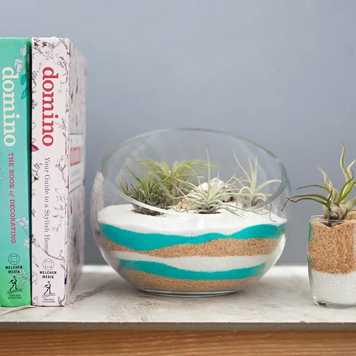 Sand Art Terrarium Diy Plus How To Care For Air Plants Gina Michele