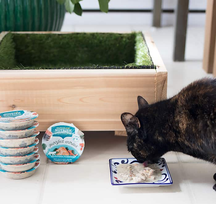 Cat Grass Bed DIY