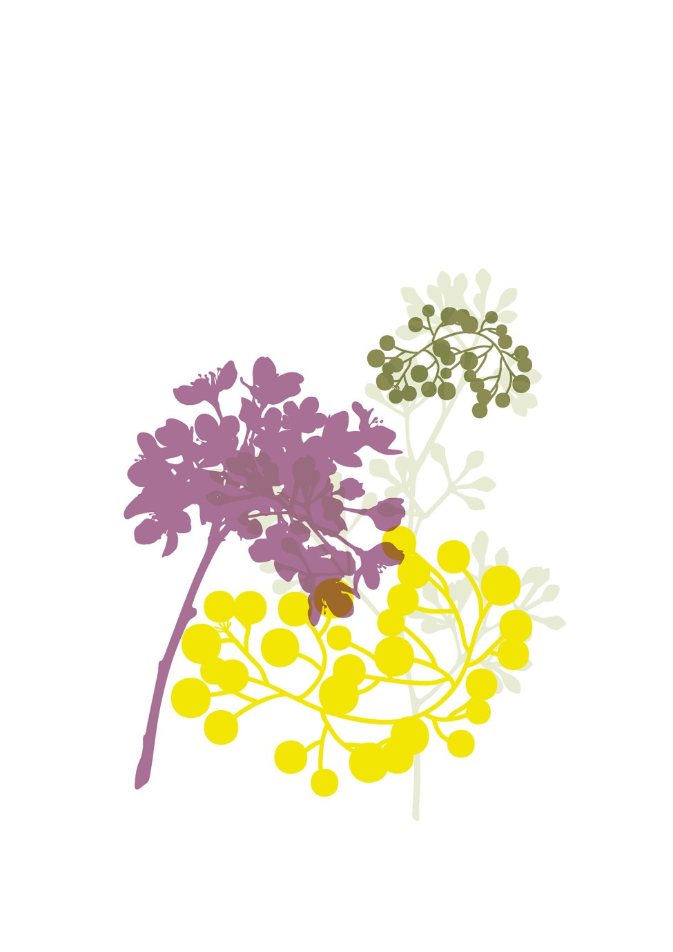 australian-flowers-illustration-02