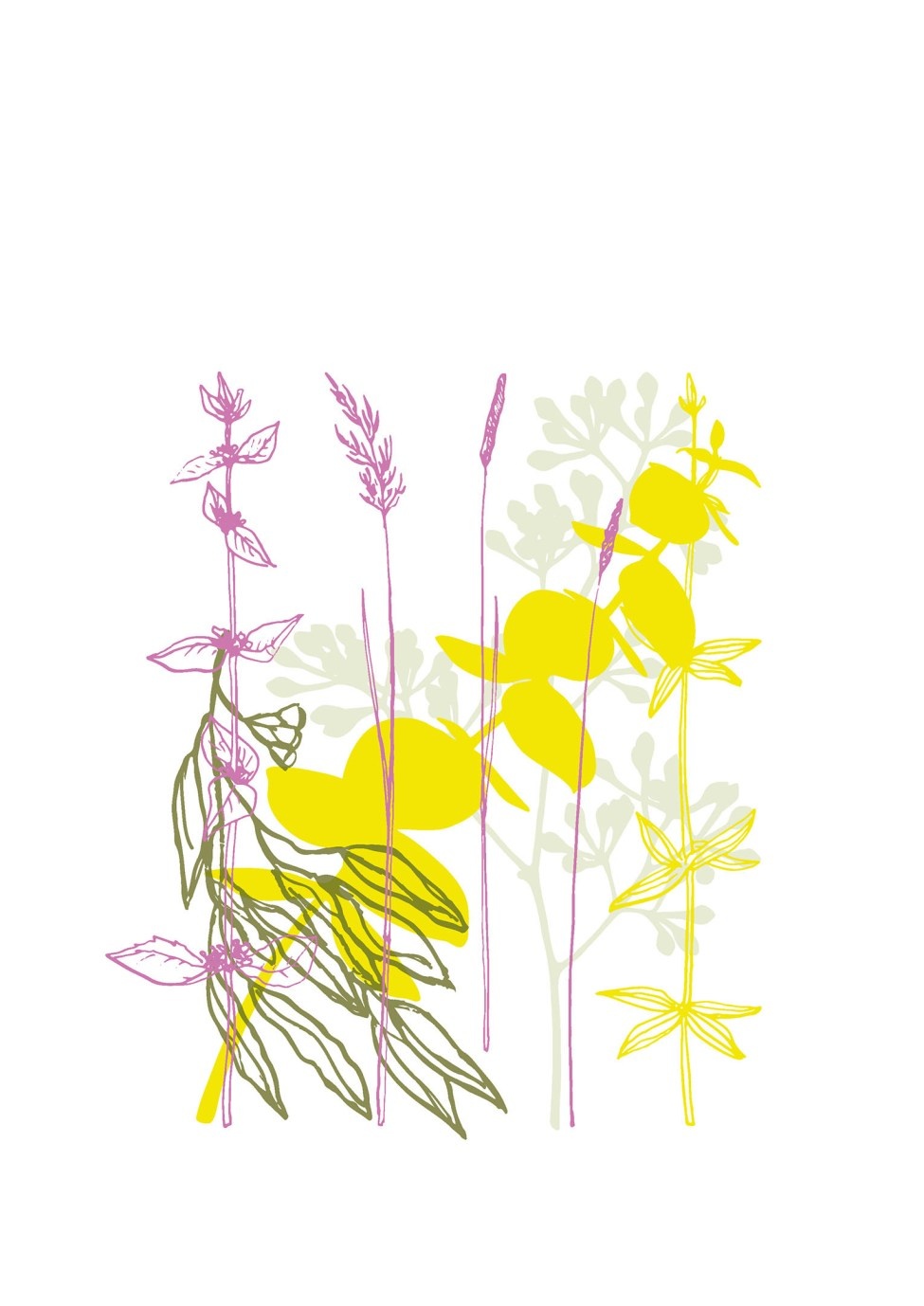 australian-flowers-illustration-05