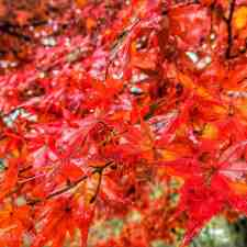 Five Reasons You Need to See Naejangsan's Autumn Foliage