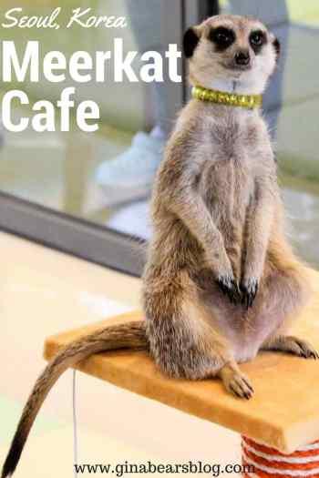 meerkat cafe hongdae