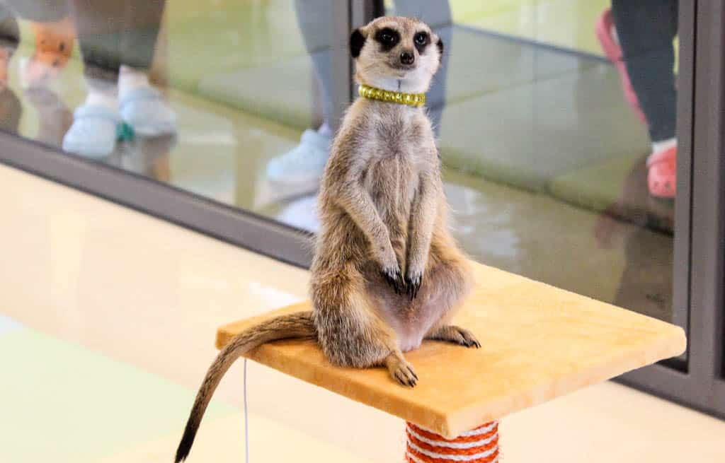 Seoul's Unique Cafes: The Meerkat Cafe in Hongdae