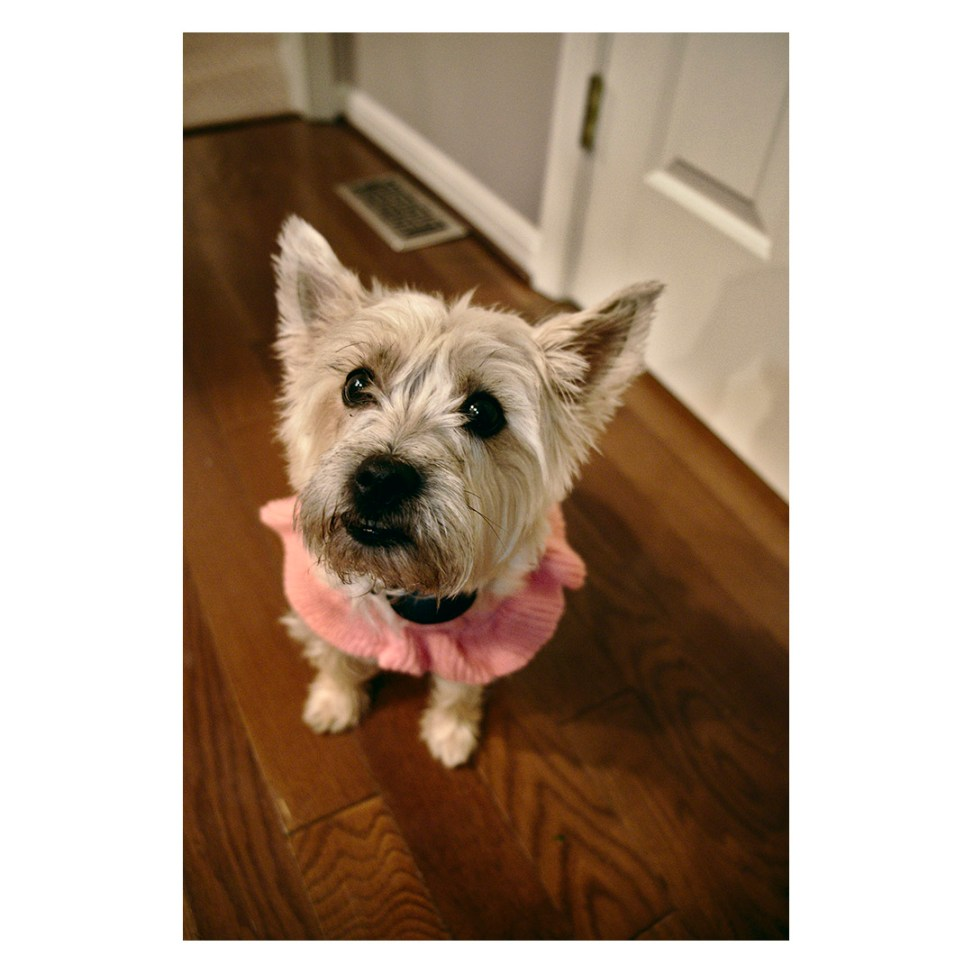 Gracie the Carin Terrier