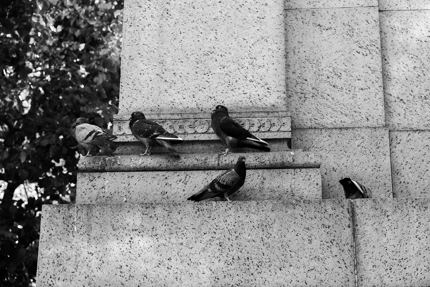 pigeons rest along a column in NYC