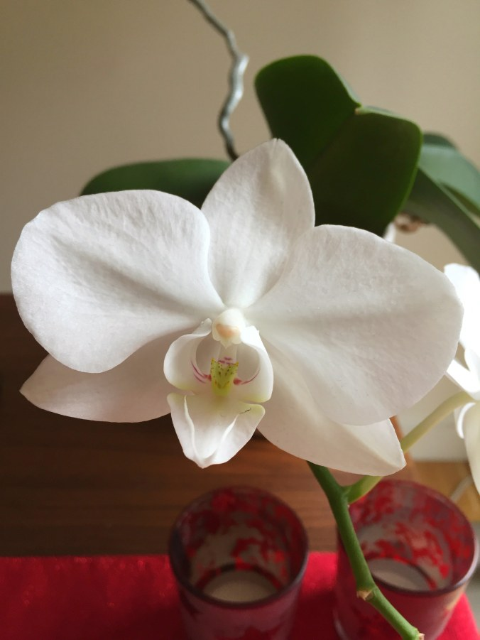Close up of some white orchids