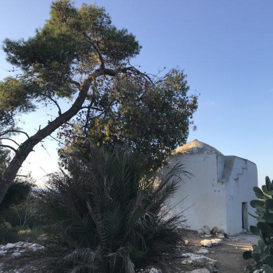 סביב קבר השייח בחברת עין רזלה (עין איילה בכרמל) נשמר בוסתן עצי פרי
