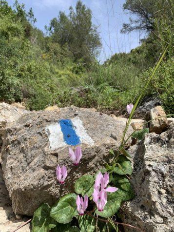 """נחל עובדיה (מארס 2020) -השביל המסומן בסמ""""ש כחול מוביל לאורך כל היובל הצפון-מערבי"""