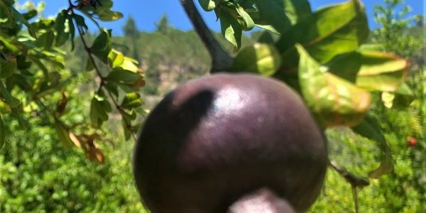 ביקור בסטף – נופי החקלאות המסורתית של ארץ ישראל