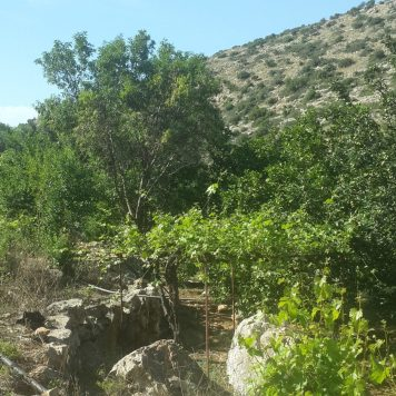 בוסתנים וחלקות ירק בנחל קנה בלב השומרון