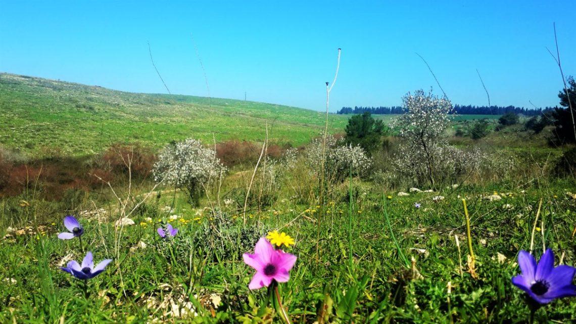 שתילת פרחי בר בגינה