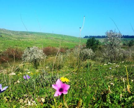 איך לגדל פרחי בר בגינה?